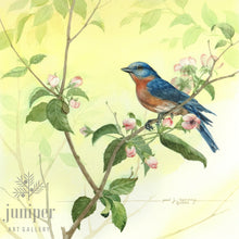 Springtime Bluebird (reproduction from original watercolor by Paul J Sweany)