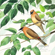 Cedar Waxwing Pair (reproduction from original watercolor by Paul J Sweany)