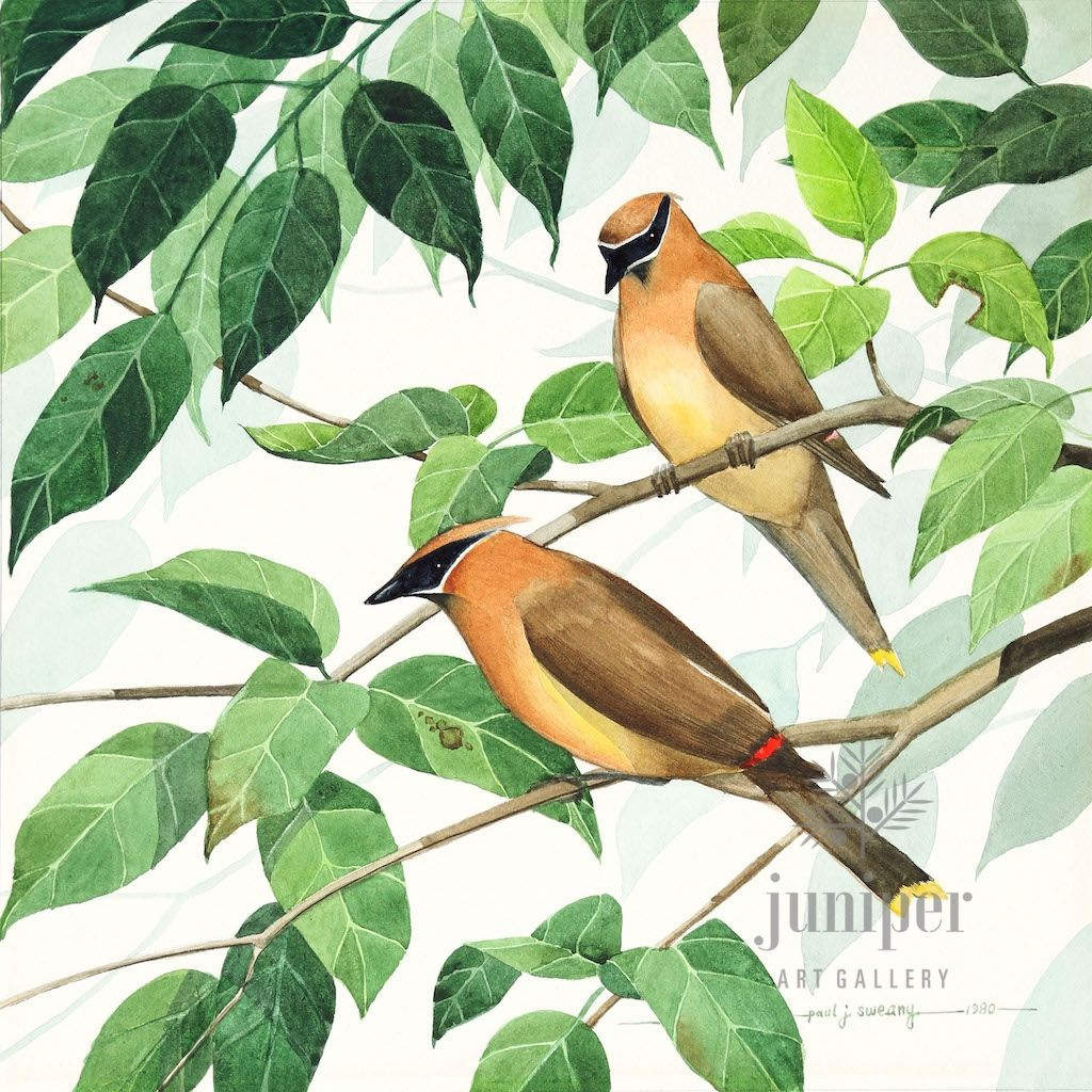Cedar Waxwing Pair, giclee reproduction from original watercolor by Paul J Sweany