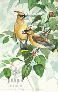 Cedar Waxwing Pair w/ Dogwood Berries (reproduction from watercolor by Paul J Sweany)