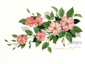 Wild Rose, Pink (reproduction from original watercolor by Paul J Sweany)