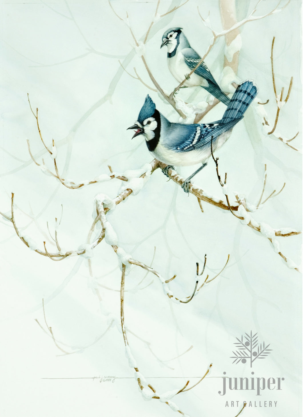 Winter Jays, giclee reproduction from original watercolor (1989) by Paul J Sweany
