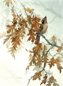 Female Cardinal on Oak Tree, giclee reproduction from original watercolor (1989) by Paul J Sweany