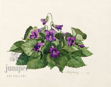 Violets (reproduction from original watercolor by Paul J Sweany)