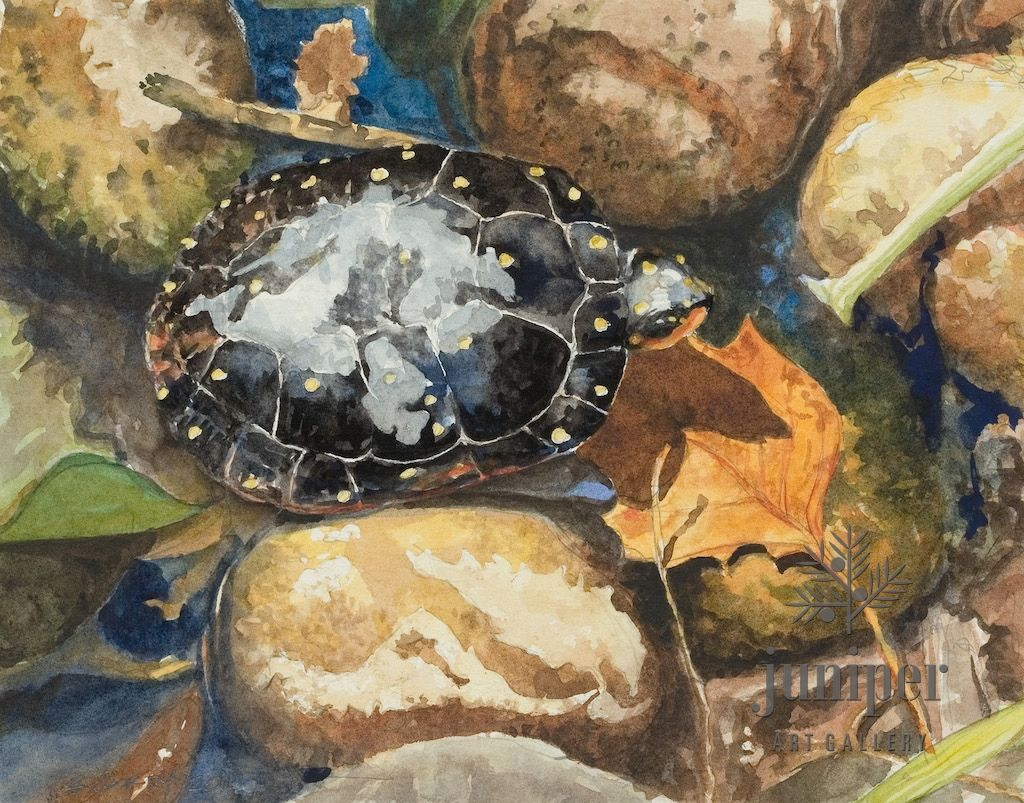 (Framed Reproduction) Spotted Turtle, by Brian Gordy