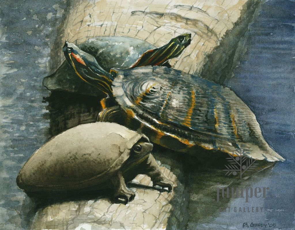 (Framed Reproduction) Three Turtles lV, by Brian Gordy