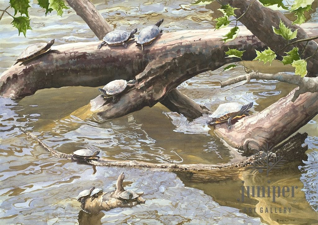 (Framed Reproduction) Turtle Overlook, reproduction by Brian Gordy