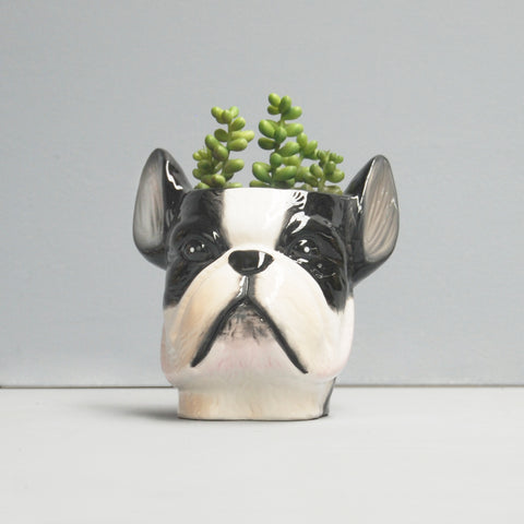 black and white french bulldog planter plant pot with succulent plant crazy plant lady gift idea birthday housewarming great present unique homewares and gifts