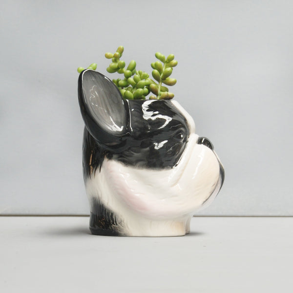 sideview black and white ceramic french bulldog frenchie planter plant pot with green succulent dog lovers gift idea birthday housewarming