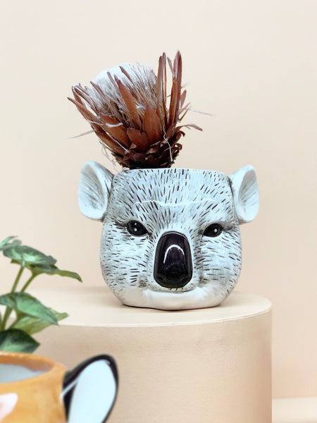 styled ceramic koala planter with native protea flower pot plant gift idea housewarming present