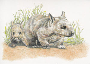 hairy-nosed wombat greeting card hand illustrated coloured pencil jo pearcy australian fauna australiana gift melbourne vic