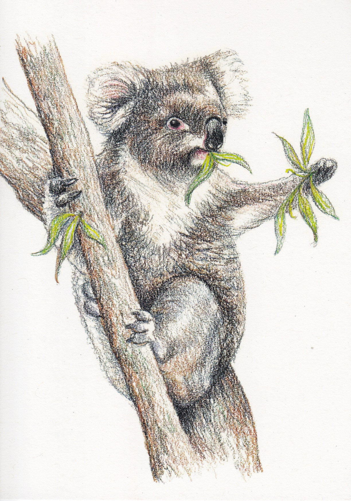 Greeting Card - Koala | Jo Pearcy