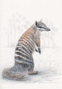 greeting card hand illustrated numbat australian fauna art coloured pencil jo pearcy melbourne vic