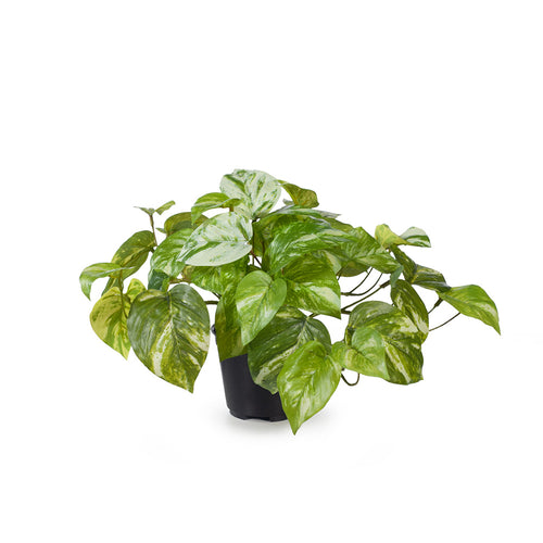 real touch artifical indoor plant marble pothos in pot white variegated leaves floral interiors fake houseplant