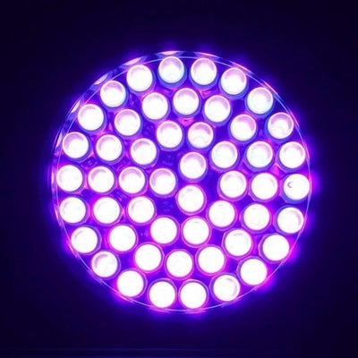 51 LED Black Light UV Flashlight