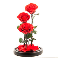 Premium Eternal Roses REAL Preserved Roses (Red and Pink) - ModernKitchenMaker.com
