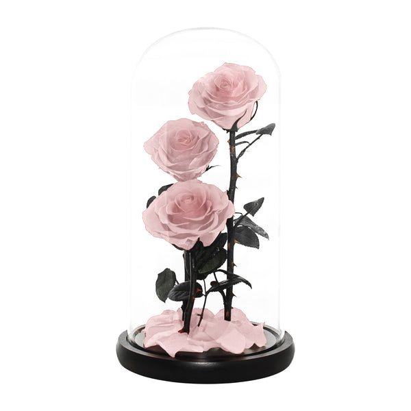 Premium Eternal Roses REAL Preserved Roses enchanted rose (Red and Pink)