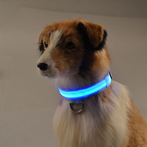 Modern Rechargeable LED Safety Dog Collar