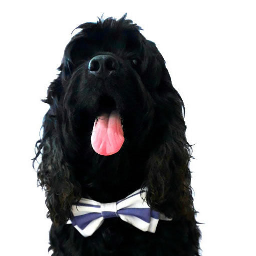 Bailey Pet Bow Tie