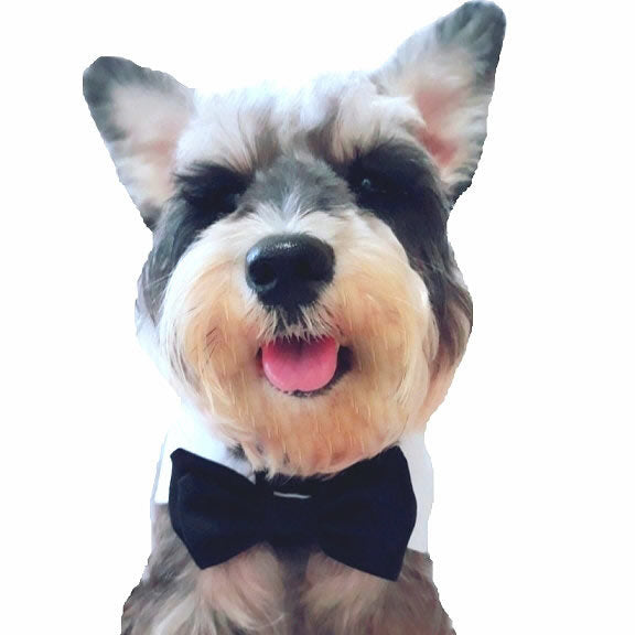 Elvis Pet Bow Tie