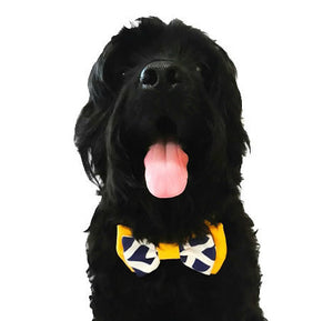 Lucky Pet Bow Tie