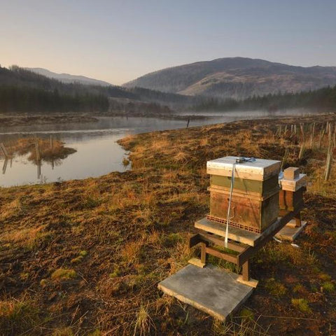 Image of Glencoe Nature Reserve Beehive