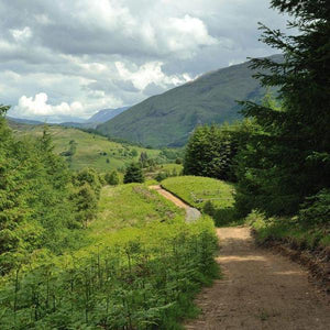 Glencoe Wood Nature Reserve Footpath
