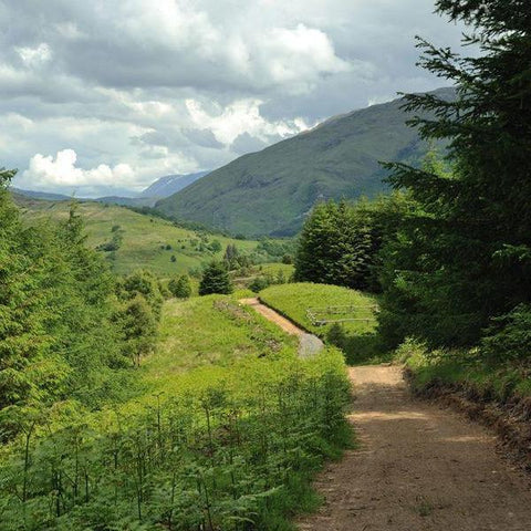 Image of Glencoe Wood Nature Reserve Footpath