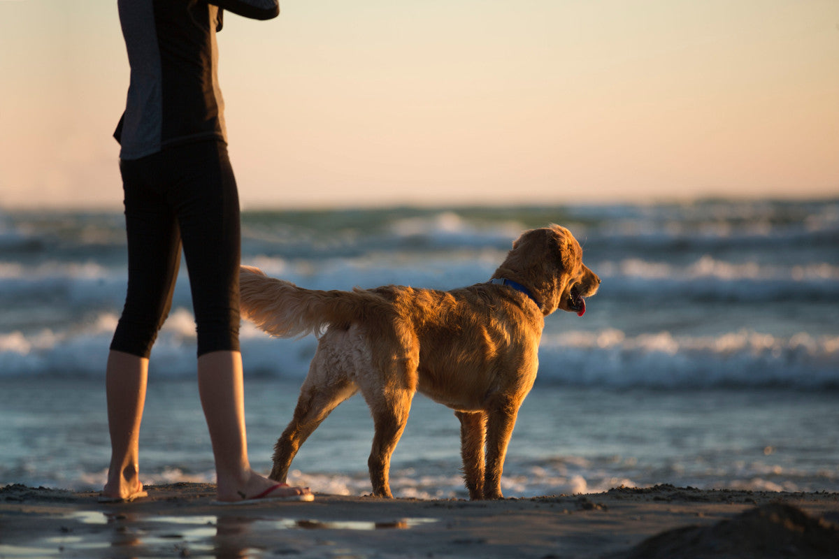 Pet Safety at the Beach