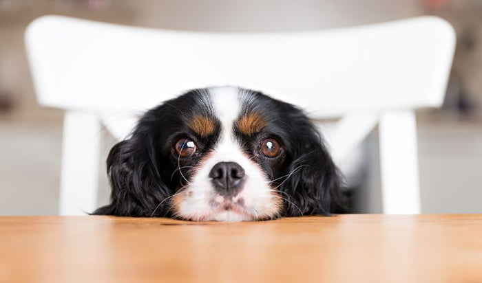 What We Need To Know About Feeding Dogs Table Scraps