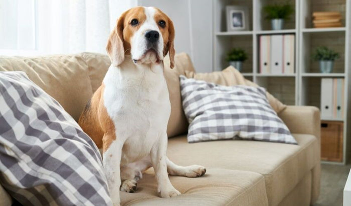 Home Safety Tips With Indoor Pets