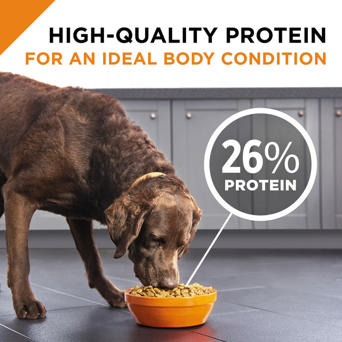 Purina Pro Plan Savor Shredded Blend Beef & Rice Formula Adult Dry Dog Food