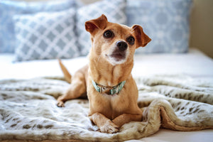 Dog Blankets & Throws : Find the right dog blanket for your pup.