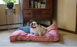 Freedom Buster Dog Beds by Iconic Pet