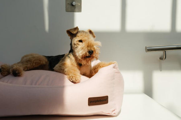 Coral Pink Linen Dog Bed by Purplebone