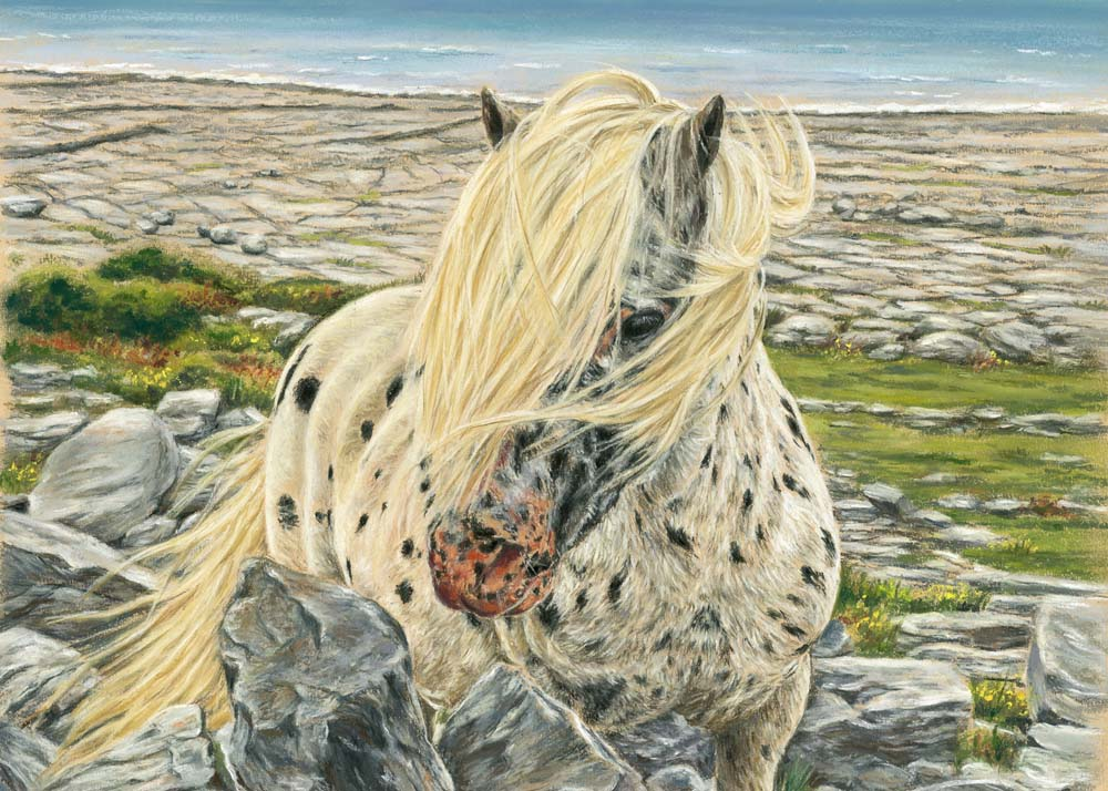 Burren Beauty - Fine art giclee print - Animal Kingdom, animals, burren, Clare, Connemara, Galway, horse, horses, Kinvara, wild