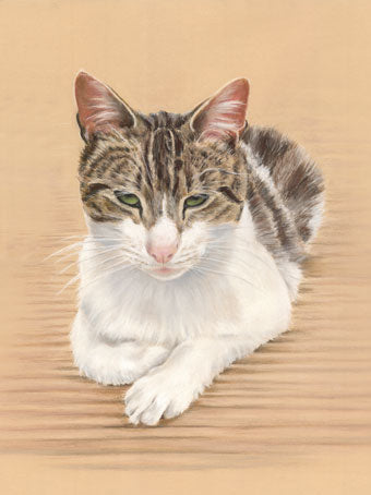 Mopsy (cause I'm worth it) - Fine art giclee print - animals, cat, cute, kitten, pet, pets