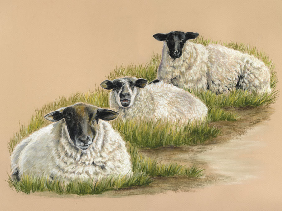 Tom, Dick & Harry - Fine art giclee print - animals, Cute, Farmyard, sheep, three