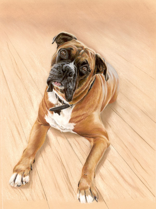 Taz - Fine art giclee print - animal, boxer, dog, dogs