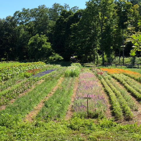 Fields at the Food Project | Serve Kindness