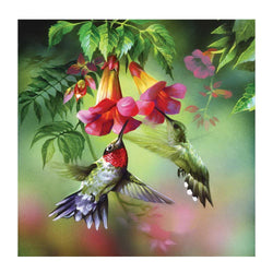 Hummingbird - Dreamer Diamond Paint Kit