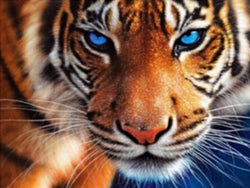 Tiger Eyes - Dreamer Diamond Paint Kit