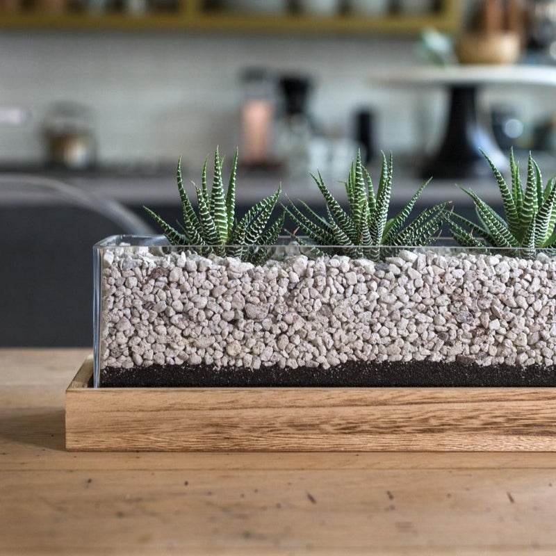 Element Rectangular Planter - Indoor Succulent Garden Centerpiece