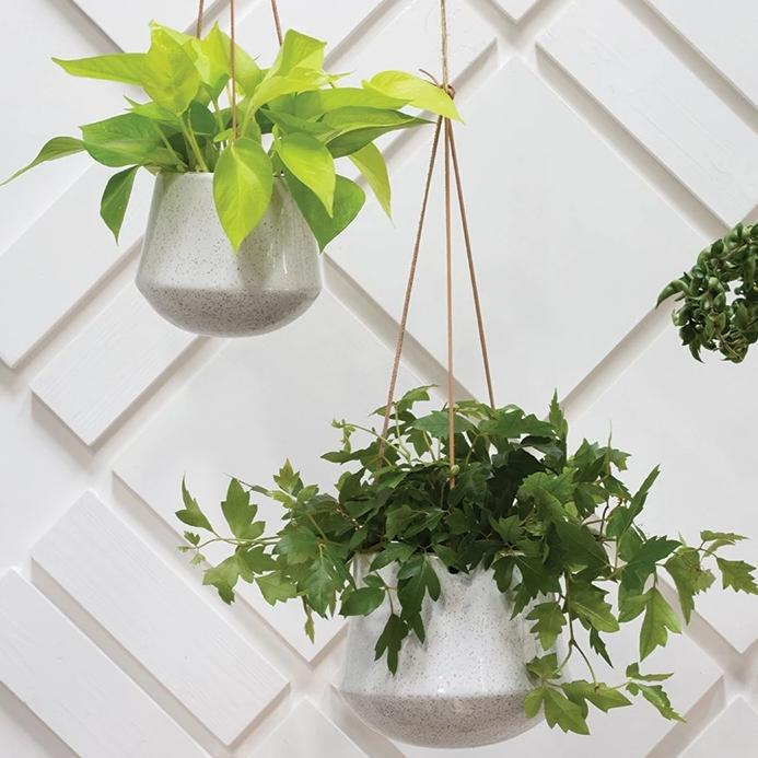 Modern Ceramic Hanging Planter with white hanging pot