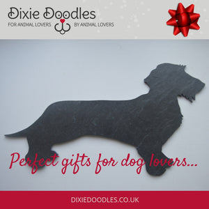 Slated Dachshund (smooth or wire) - Dixie Doodles Pet Shop