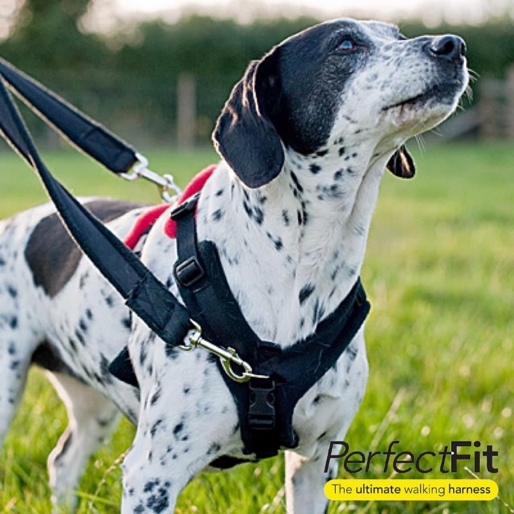 Perfect Fit Harness - 3 Piece Kit