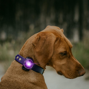 Orbiloc Dog Safety Light