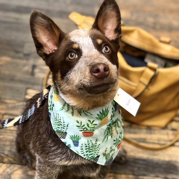 Puppy or Kiddo Snap Bandanna