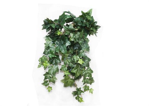 Green English Ivy Bush (1 Piece)1