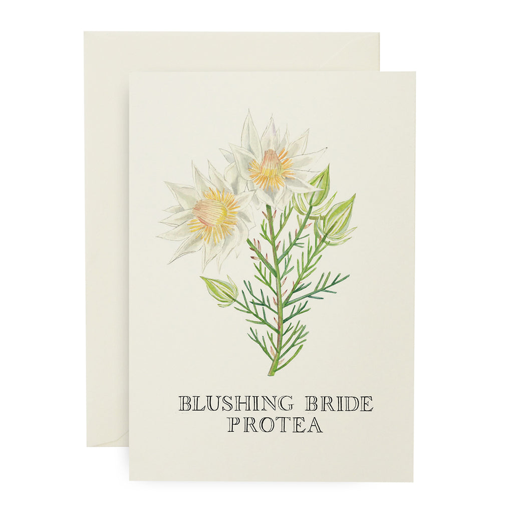 Blushing Bride Protea Card
